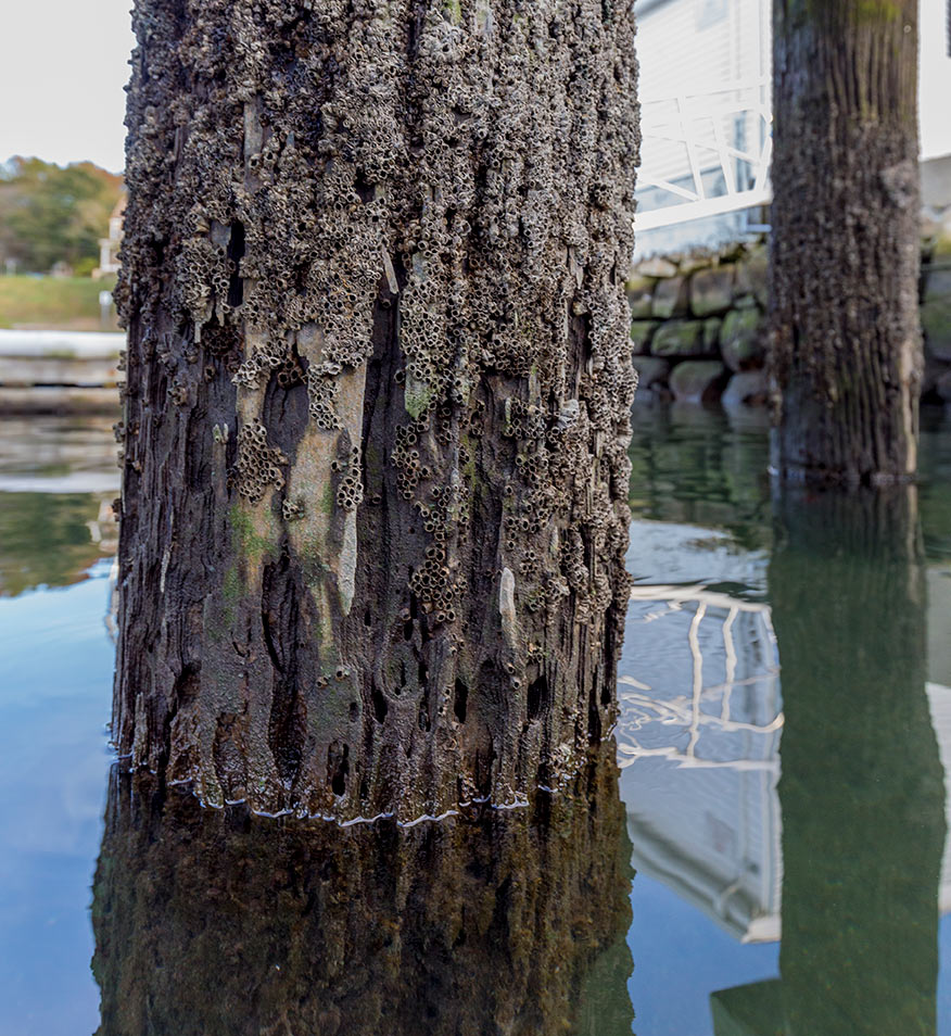 rotted wood pilings