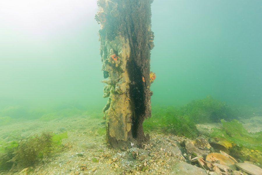 rotting wood pilings