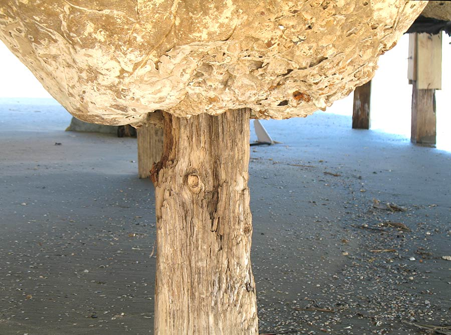 Wooden home foundation pilings rotted after Hurricane Ike